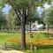 Historischer Park mit Blüteninsel und Rondell