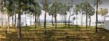 Wald_Wohnen