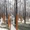 Stelen im Wald