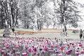 Blumenspuren im Goldsteinpark