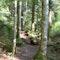 Wanderweg Wiedenbachtal